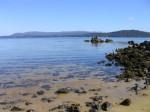 Clear water off Ulva Island