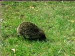 Another non-native animal encounter!